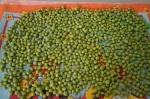 сушка семян зеленого гороха